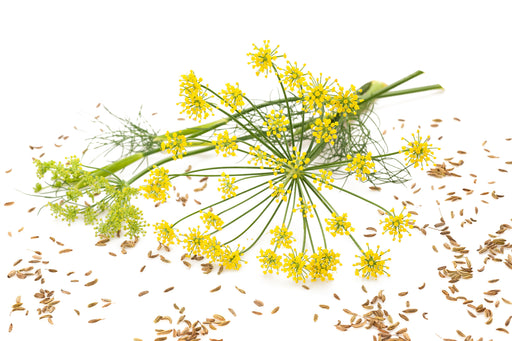 Fennel Sweet Organic Essential Oil - Sunrise Botanics