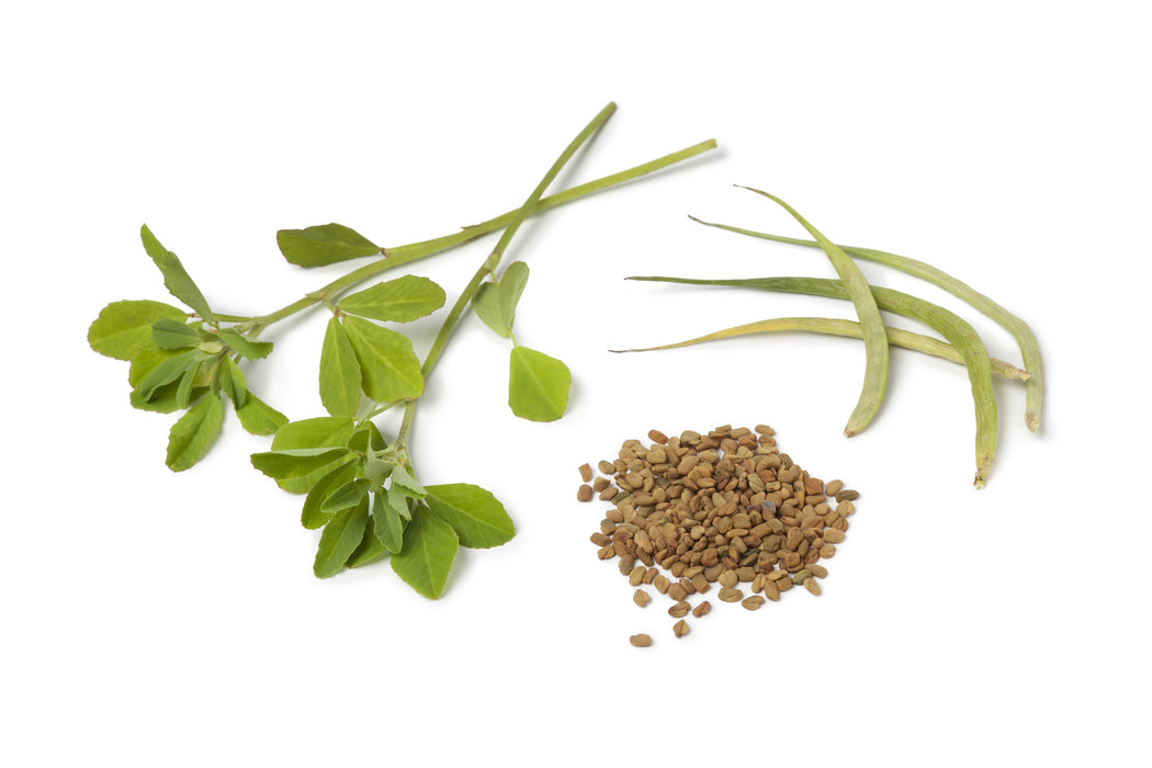 Fenugreek Essential Oil (India) - Sunrise Botanics