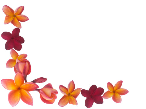 Hawaiian Plumeria Fragrance Oil - Sunrise Botanics