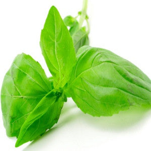 Holy Basil Essential Oil (India) - Sunrise Botanics