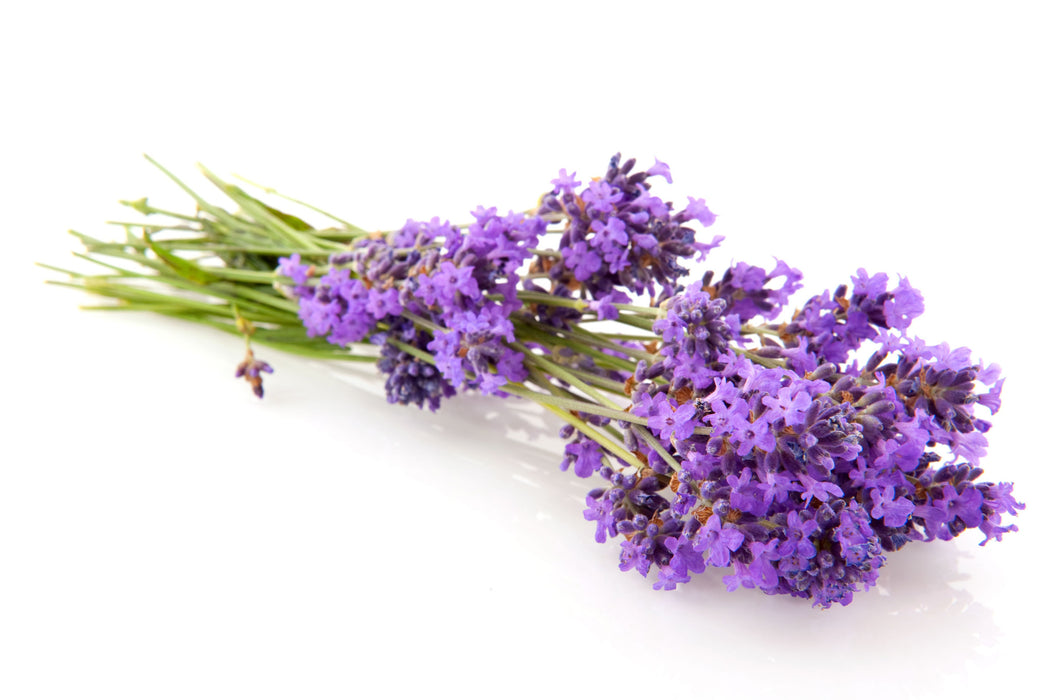French Lavender Fragrance Oil - Sunrise Botanics