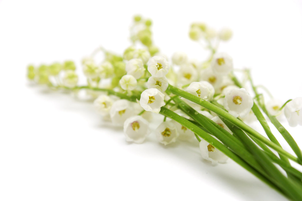 Lily of the Valley Fragrance Oil - Sunrise Botanics