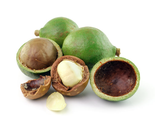 Macadamia Nut Carrier Oil (Unrefined) - Sunrise Botanics