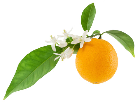 Orange (5 Fold) Essential Oil - Sunrise Botanics