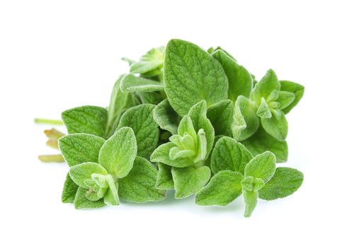 Oregano Essential Oil (Turkey) - Sunrise Botanics