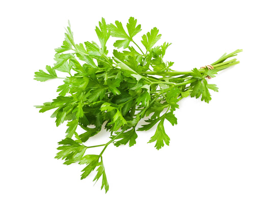 Parsley Essential Oil (India) - Sunrise Botanics