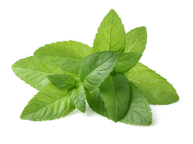 Peppermint Essential Oil (India) - Sunrise Botanics