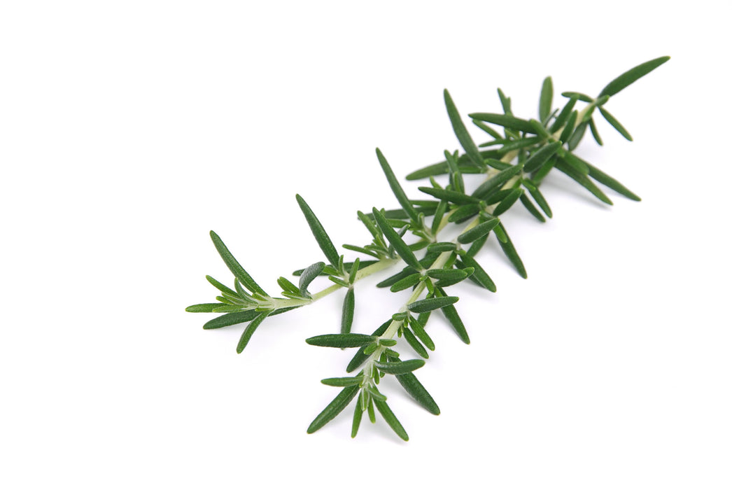 Rosemary Organic Essential Oil - Sunrise Botanics
