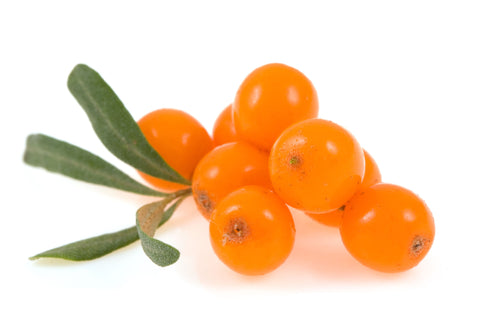 Sea Buckthorn Carrier Oil - Sunrise Botanics
