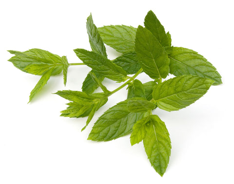 Spearmint Essential Oil (China) - Sunrise Botanics
