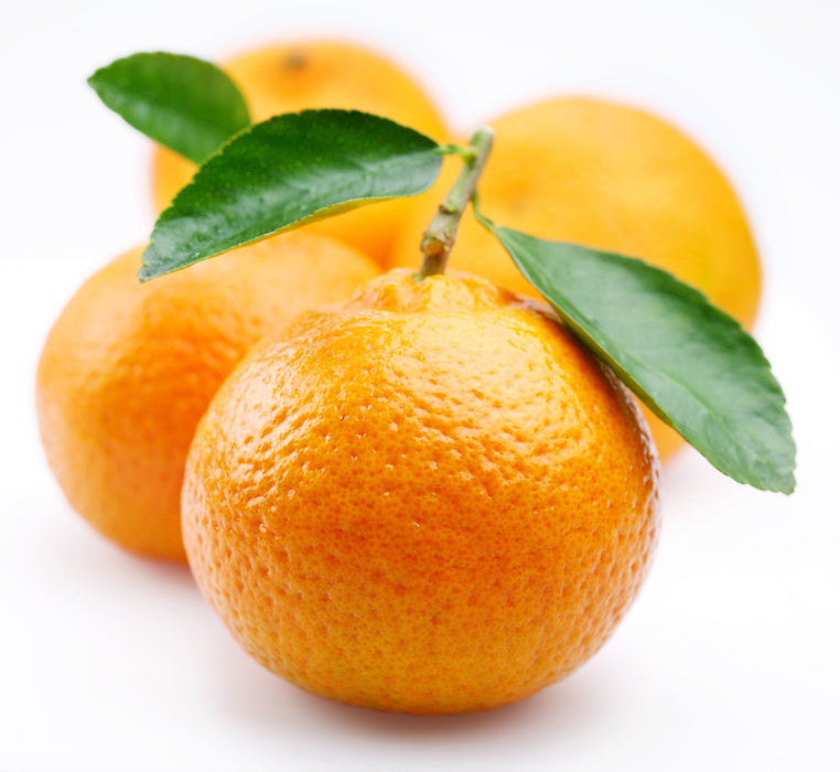 Tangerine (5 Fold) Essential Oil - Sunrise Botanics