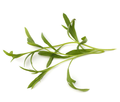 Tarragon Essential Oil (Hungary) - Sunrise Botanics