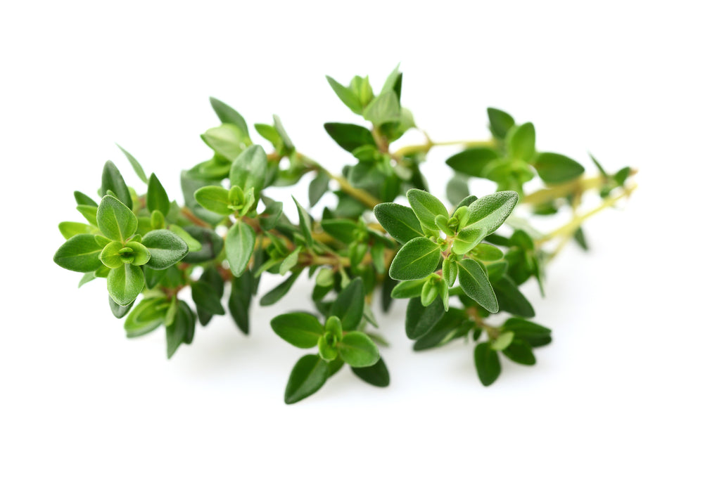 Thyme White Essential Oil (Spain) - Sunrise Botanics