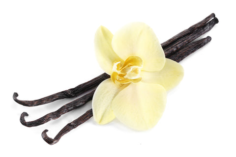 Vanilla Essential Oil (India) - Sunrise Botanics