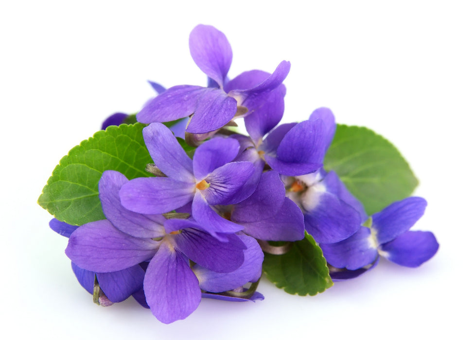 Violet Fragrance Oil - Sunrise Botanics