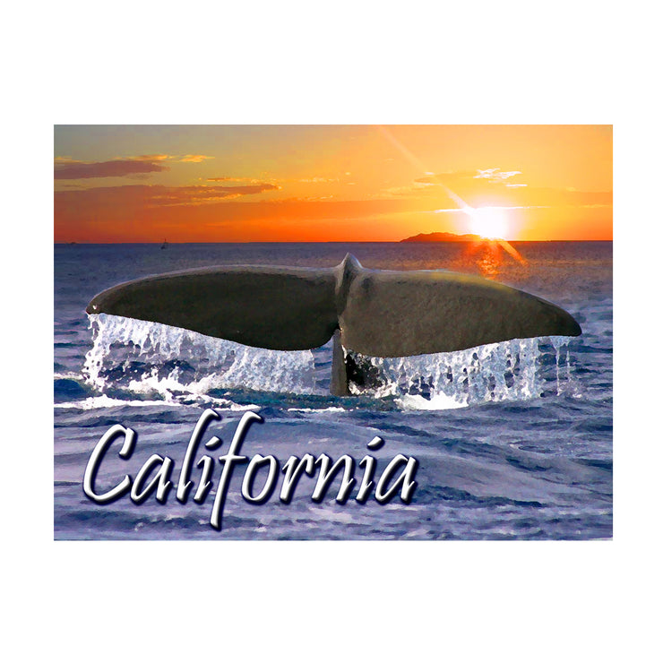 "Bronze Baboon wholesale. We make custom magnets. ""California Whale"" 2.5"" x 3.5"" Magnet"