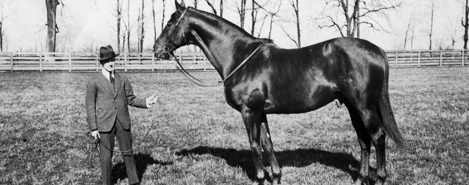 Cheval Man O'War