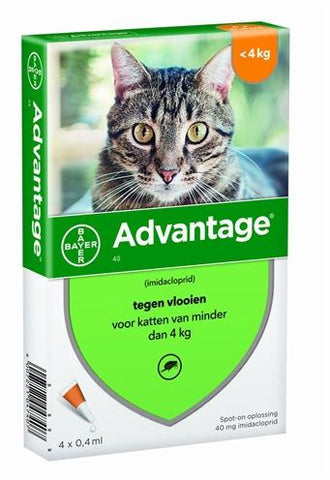 Bayer Advantage Kat 40 tot 4 kg 4 Pipet - Luxory Pets