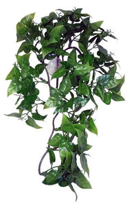 Komodo philodendron plant 30 cm - Luxory Pets