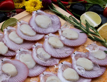 Load image into Gallery viewer, Hard Shell Pink Scallop 粉红扇贝 (40/50pcs)