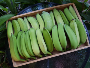 Bananas - Lady Finger