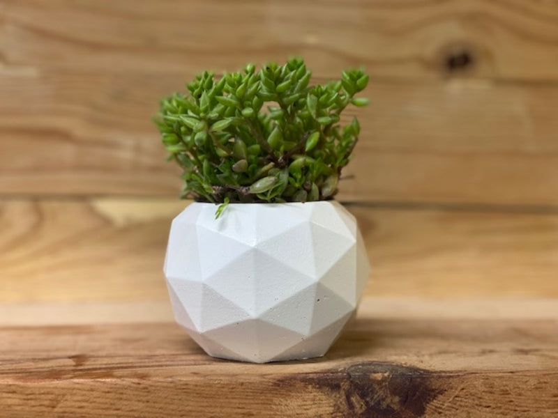 "5.5"" Handmade Concrete pot with Succulent from Light Pot"