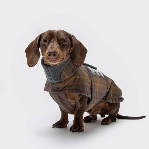 Hundemantel Brooklyn Dackel Waxed Tartan