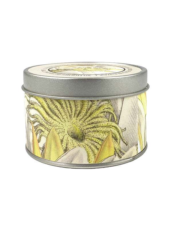 Scented Candle Starseed