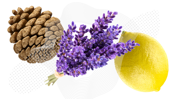 Aromatic terpenes are found in such flora as pine, lavender and lemons