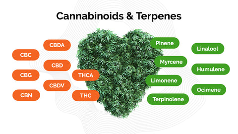 Cannabinoids and Terpenes