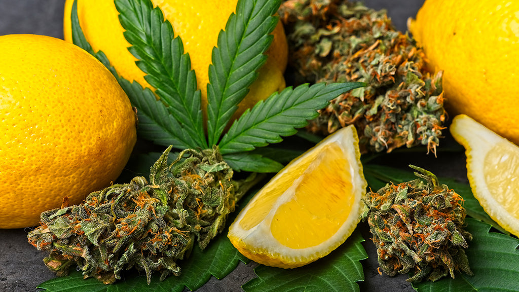 what is a terpene