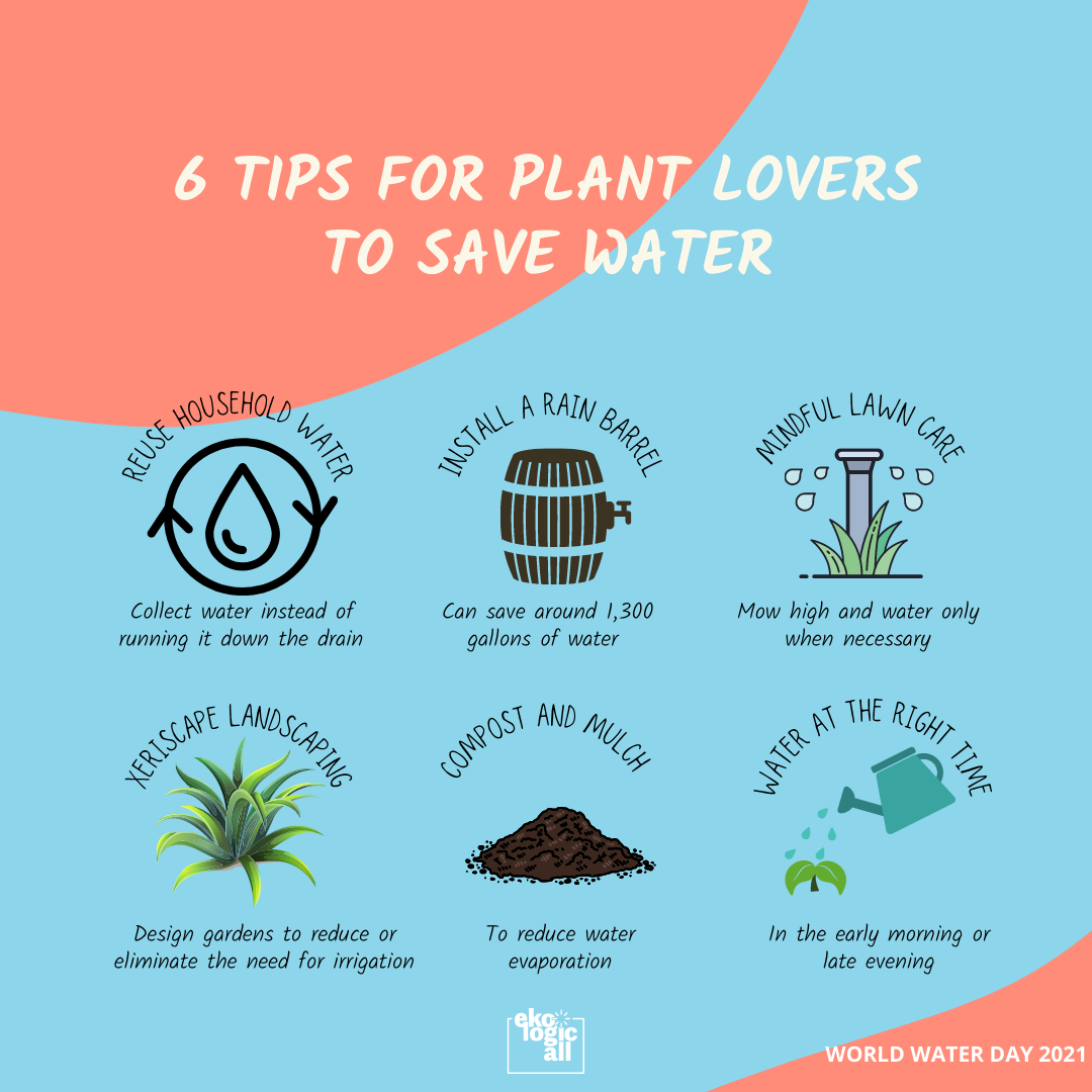 6 tips for plant lovers to save water