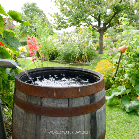 Rain Barrel in backyard