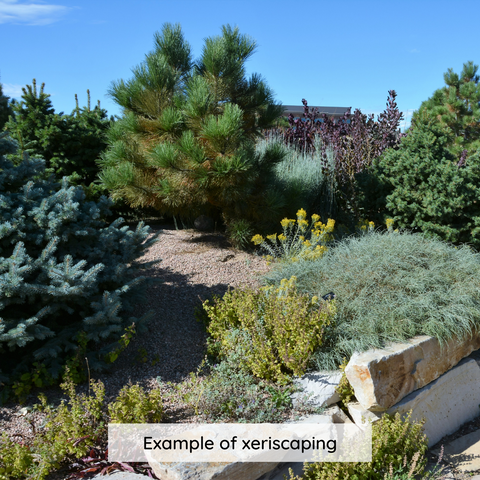 Example of xeriscaping