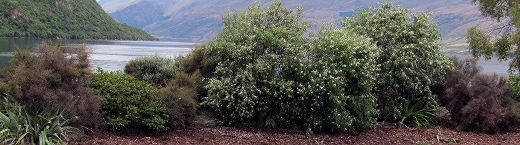 planting riparian margins in new zealand natives