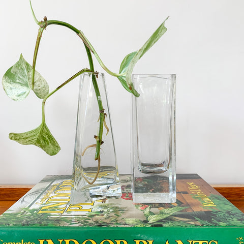 GLASS PROPAGATION VASES - HEY JUDE WORKSHOP • Vintage furniture & wares.