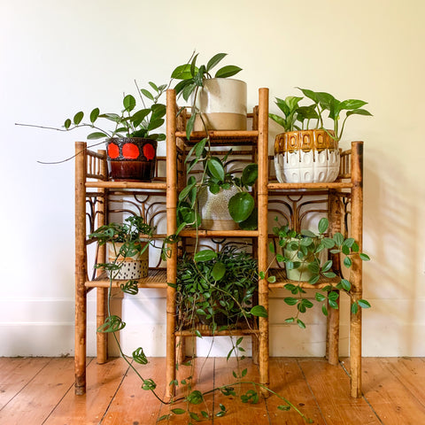 TIGER CANE PLANT STAND - HEY JUDE WORKSHOP