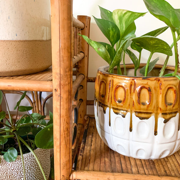 TIGER CANE PLANT STAND - HEY JUDE WORKSHOP • Vintage furniture & wares.