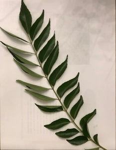 Farm fresh curry leaves - 1/2 lb (FREE Shipping)