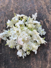 Load image into Gallery viewer, Arabian Jasmine(Jasminum sambac) - Available for back order and will take atleast 2-4 weeks to ship
