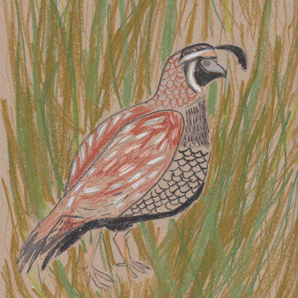 """Q"" is for Quail (II)"