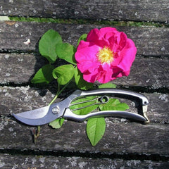 Stainless Steel Secateurs