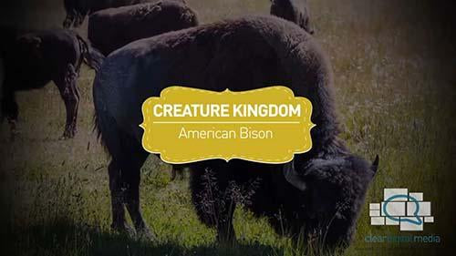 Creature Kingdom: American Bison