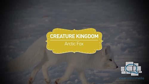 Creature Kingdom: Arctic Fox