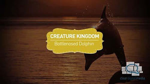 Creature Kingdom: Bottlenose Dolphin