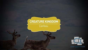 Creature Kingdom: Caribou