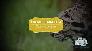 Creature Kingdom: Clouded Leopard