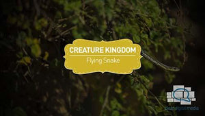 Creature Kingdom: Flying Snake