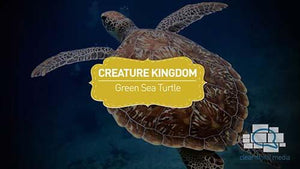 Creature Kingdom: Green Sea Turtle