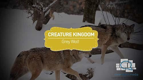 Creature Kingdom: Grey Wolf